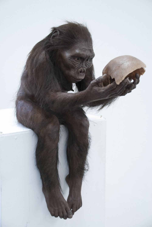 Australopithecus Afarensis - Anna Henderson
