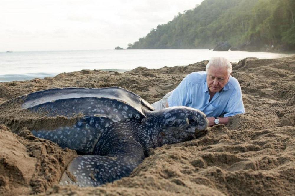 The David Attenborough Appreciation Society