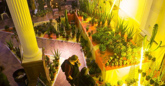 RHS Summer Urban Garden Show